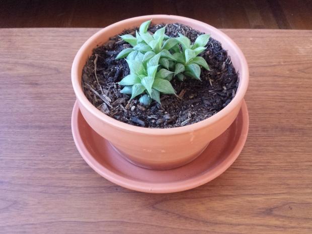 Thrift Store Terracotta Planter